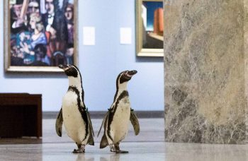 Art World Roundup: from the design behind Italian domes to penguins in a museum