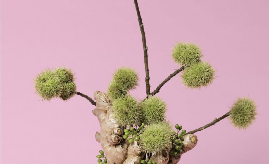 Ann Shelton arranges flowers into beautiful photographs for a show about a women's right to control her fertility