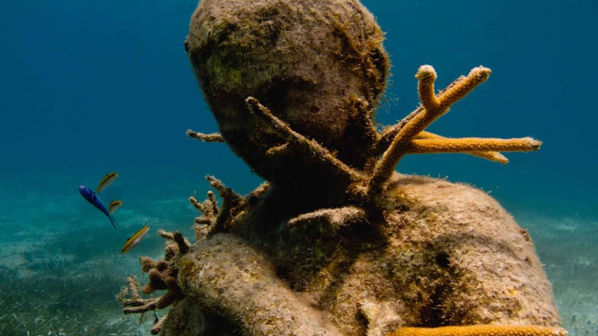 Underwater sculptures: creating life and awareness