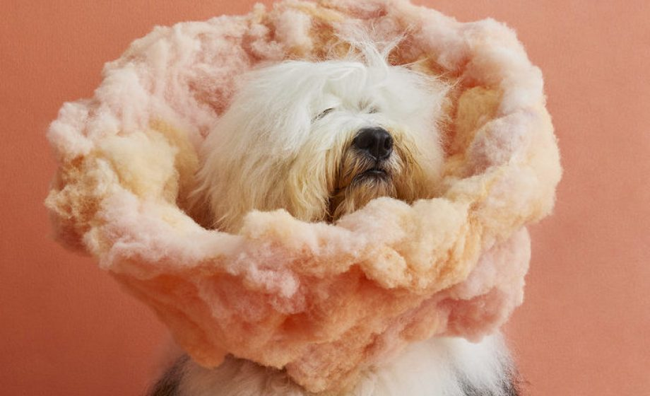 A whimsical photography series helping out our four-legged friends