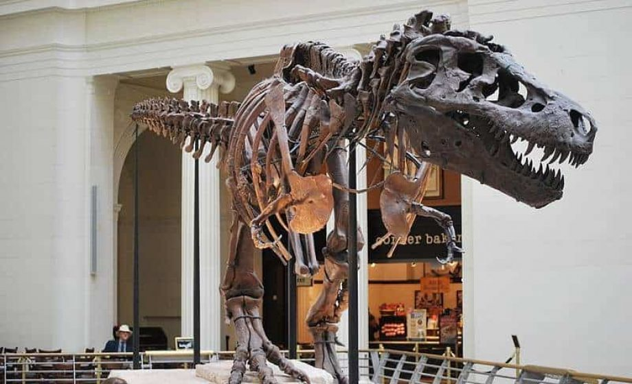Twitter favourite Sue the T. Rex gets new digs in Chicago's Field Museum